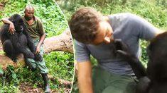 어미 잃은 고릴라를 위로하는 공원 관리자와 감사를 표하는 새끼고릴라