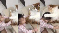 (영상) 자신을 귀여워해 주는 아기에게 '독특한 방식'으로 애정표현하는 고양이