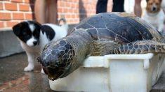 포항에서 죽은 채 발견된 '멸종위기' 푸른바다거북의 마지막 모습