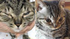 치료 때문에 쌍꺼풀 수술받고서 '귀염뽀짝'한 모습으로 변한 고양이