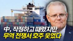 호주, 中과 무역전쟁서 웃었다.. 대중 수출 20% 증가