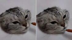 """""""고양이를 한번 그려보겠습니다…"""" 80만 누리꾼들을 깜짝 놀라게 한 '6초 영상'"""