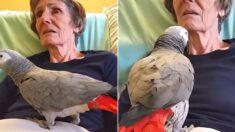 25년 함께 산 반려 앵무새에게 '마지막 인사' 건네는 할머니 (영상)