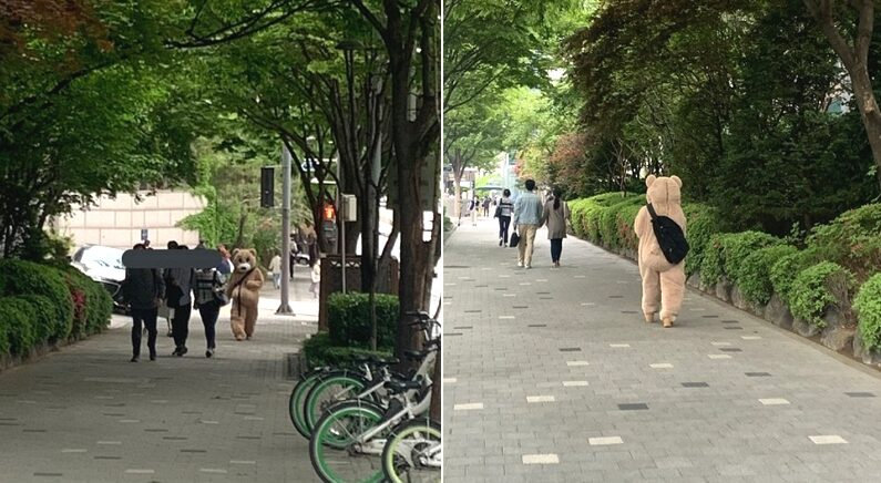 대낮 서울 거리 한복판에서 곰 한 마리가 목격되는 사건(?)이 발생했다