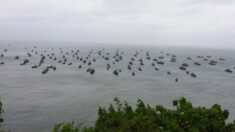 매일 100척 넘게 서해 바다 침범하는 불법 중국 어선들 근황이 전해졌다