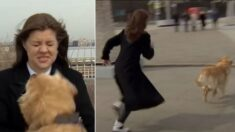 생방송 중 마이크 물고 도망친 강아지와 뒤쫓는 기자의 숨 막히는 '추격전' (영상)