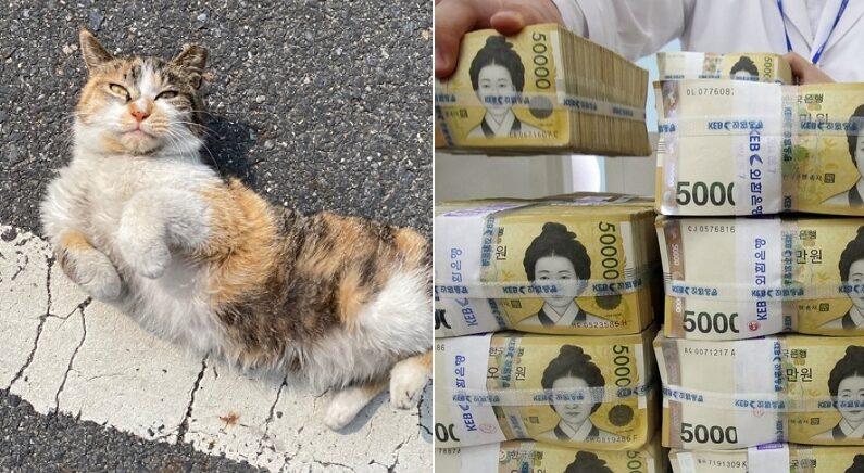 """""""불쌍한 길고양이를 구해준 뒤, '복권 1등'에 당첨됐어요"""""""