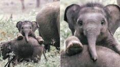 정면에서 보는 아기 코끼리 얼굴은 이렇게나 귀엽습니다