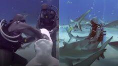 상어 입에 걸린 낚싯바늘 빼준 여성, 다음 날부터 상어가 친구들을 데려왔다 (영상)