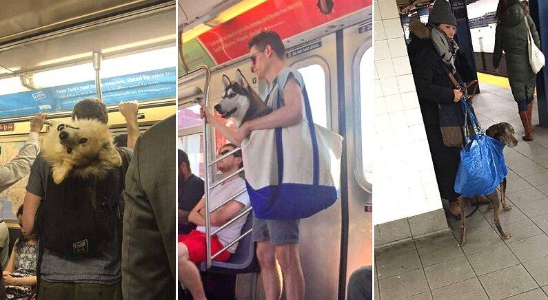 뉴욕에 사는 강아지들이 사랑하는 주인님과 함께 지하철 타는 방법
