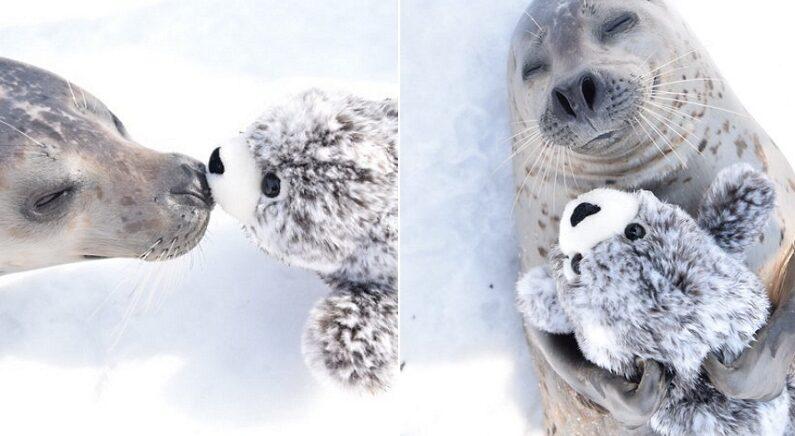 엄마랑 떨어져 외로워하다 자기 닮은 인형 선물 받고 품에 꼭 안은 아기 물범
