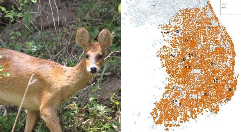 전 세계에서 '멸종 위기' 초희귀종인데 한국에서는 엄청 흔한 동물의 정체