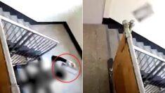 계단 올라오다 말고 고객 물건 집어 던지는 택배기사, CCTV에 딱 걸렸다 (영상)