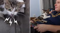 뒷다리를 쓰지 못하는 사나운 새끼 고양이를 사랑으로 돌봐준 결과(영상)