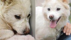 세상에서 사람이 가장 싫은 '우울증' 걸린 강아지의 '표정 변화'