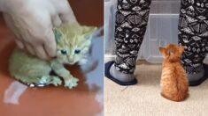엄마한테 버림받았던 자기 목숨 구해준 아저씨 뒷모습만 바라보는 아기 고양이