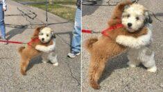 엄청 친한 단짝 강아지들이 코로나 때문에 1년 만에 만난 순간 보인 반응