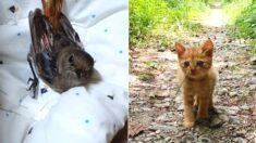 """""""다음 생엔 고양이로 태어나 다시 만나자"""" 죽어가는 아기 새가 들은 말, 그리고 얼마 뒤 진짜 나타난 아기 고양이"""