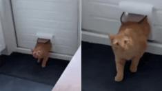 실수로 남의 집에 들어갔다가 모르는 사람과 눈 마주쳐서 '찐' 당황한 고양이 (영상)