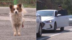 """""""설레고 확인하고 실망하고…"""" 고속도로 졸음쉼터에 자신을 버린 주인을 위해 강아지가 매일 한 일"""
