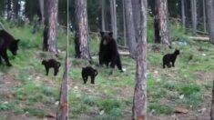 고기 냄새 맡고 찾아온 거대한 곰 정도는 가뿐히(?) 내쫓는 러시아 고양이 (영상)