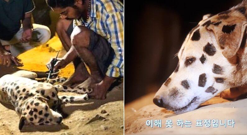 인도 사람들이 야생 표범으로부터 사랑하는 강아지를 지키는 법