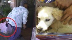 시골에서 동물병원 운영하는 수의사에게 '보자기'로 강아지를 싸온 할머니