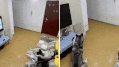 개 키우는 집이 전기세가 많이 나올 수 밖에 없는 이유(영상)