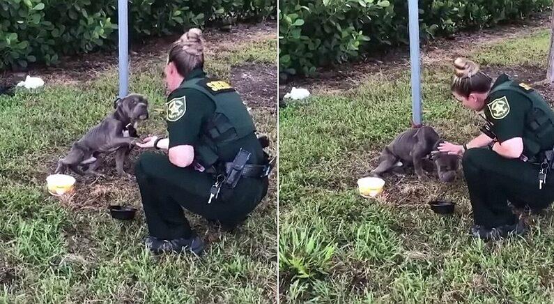"""""""저 좀 구해주세요"""" 말뚝에 묶인 채 버려진 강아지는 다가온 경찰관에게 손을 내밀었다"""
