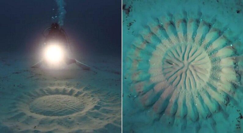 과학자들이 12년 만에 밝혀낸 바다 해저에서 발견된 신비한 문양의 비밀